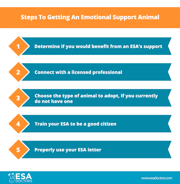 Steps to getting an emotional support animal from esadoctors.com infographic.