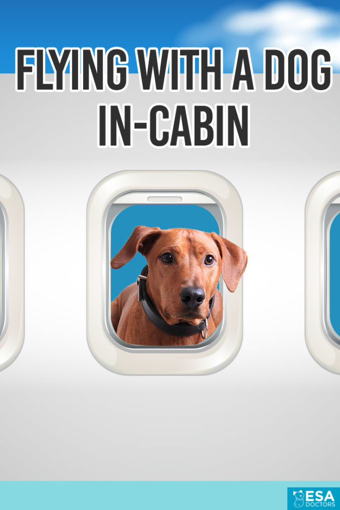 Flying with a Dog In-Cabin
