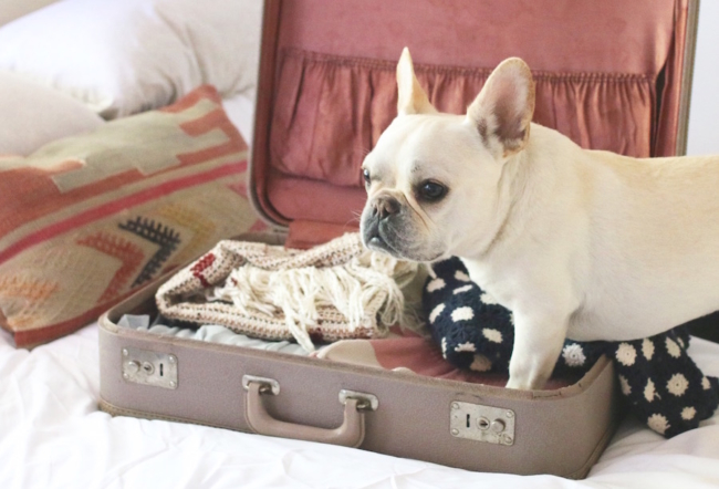 When flying with a dog in-cabin make sure to prepare beforehand so that your flight is stress-free and smooth.