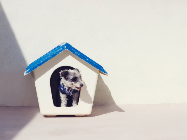 fair housing act emotional support dog