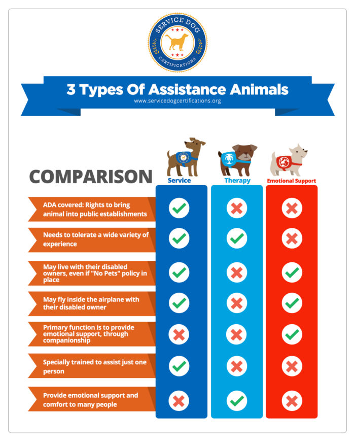 service dog, esa, therapy dog differences