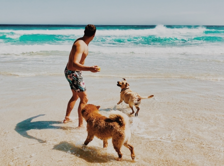 man and dogs at beach
