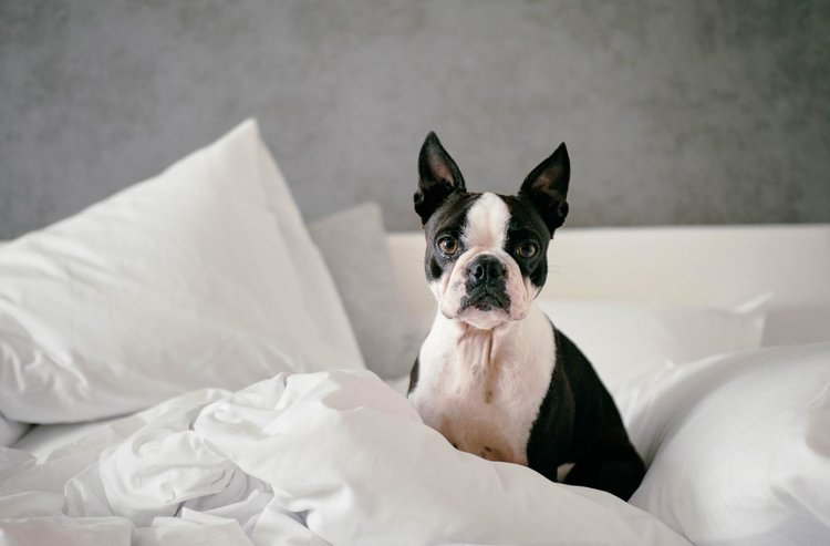 """An ESA letter is valid at """"no-pets"""" apartments and inside the cabin of airplanes."""