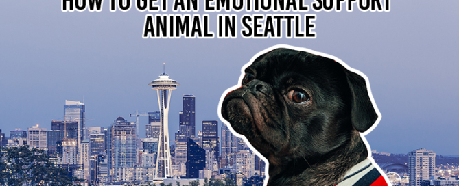 How to get an Emotional Support Animal in Seattle - 750px