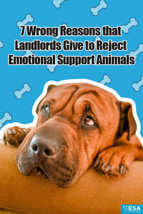 Excuses that landlords, HOA's, and condos give to deny emotional support animals.