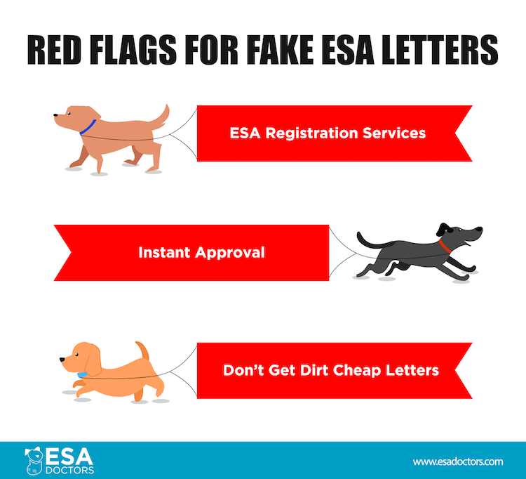 Red flags for fake esa letters