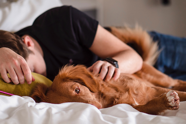 The presence and comfort of an emotional support dog is one of the ways dogs can help people with autism. - ESADoctors