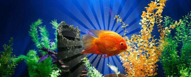 emotional support fish - mental health