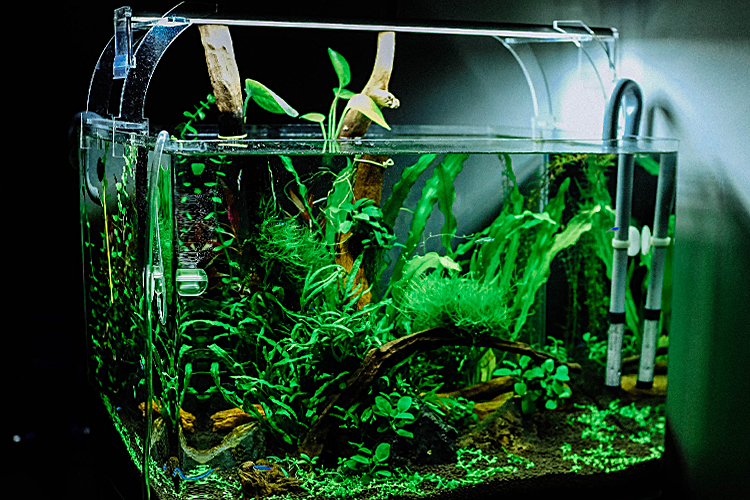 Can pet fish help with anxiety - ESADoctors