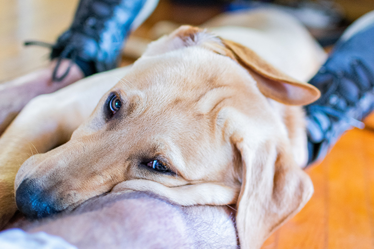 Protect your right to own an emotional support animal; know what an ESA letter for housing looks like.