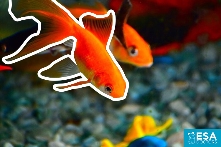 Pet fish for anxiety.