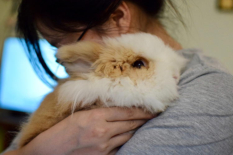 Rabbits are very attentive to their environment and soft to touch, making them a perfect emotional support animals - ESADoctors