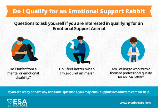 How to qualify for an ESA rabbit infographic.