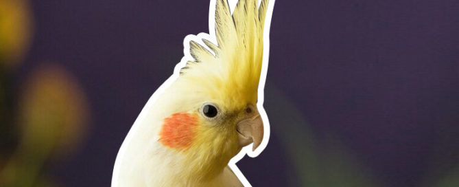 Emotional support bird