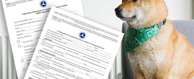 How to Fly with a Service Dog Using the DOT's Service Animal Air Transportation Form - ESA Doctors