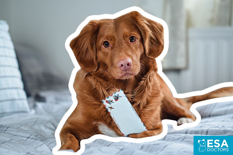 Psychiatric service dog with PSD letter