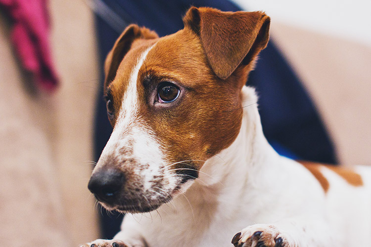 The unconditional love and loyalty of an emotional support animal may help to break symptoms of OCD. - ESADoctors