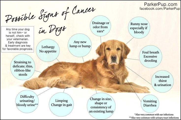 11 Signs of Cancer in Dogs