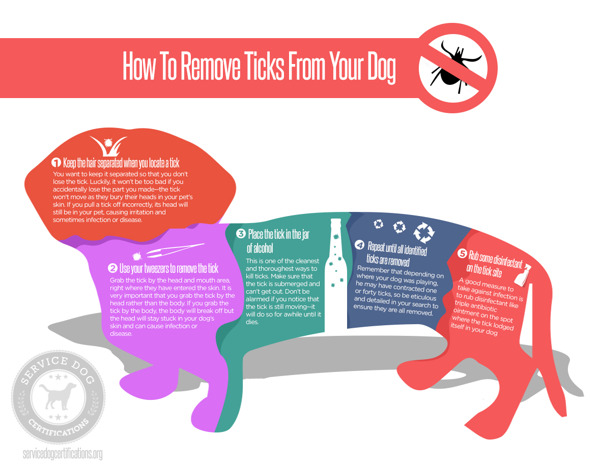 How to remove ticks from my dog