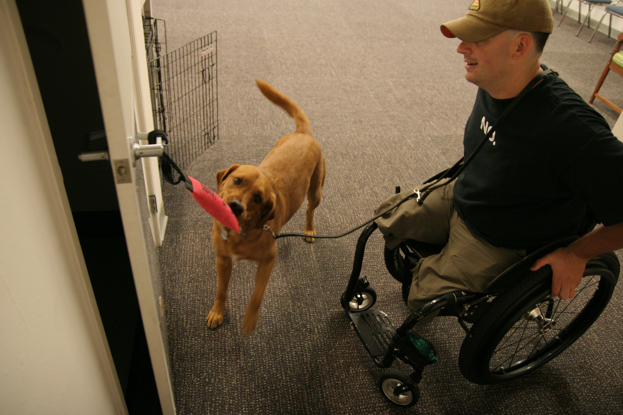 Service Dog Services and Tasks