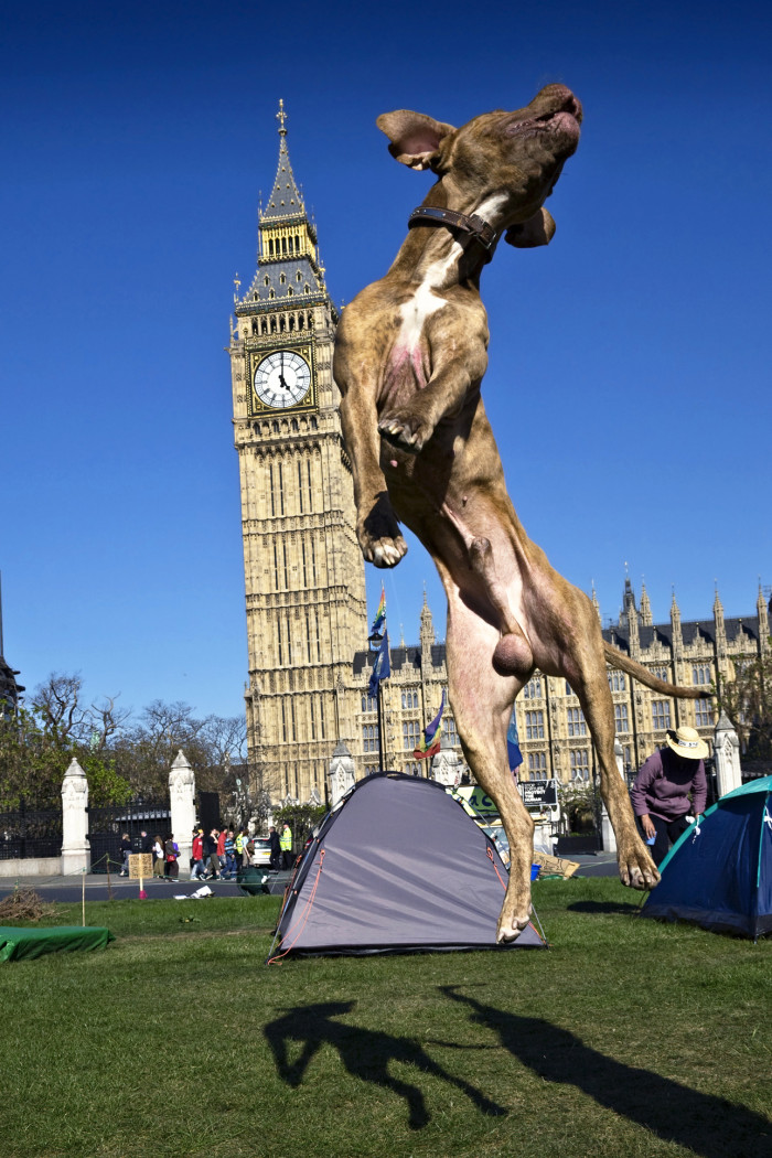 Traveling to London with your dog?