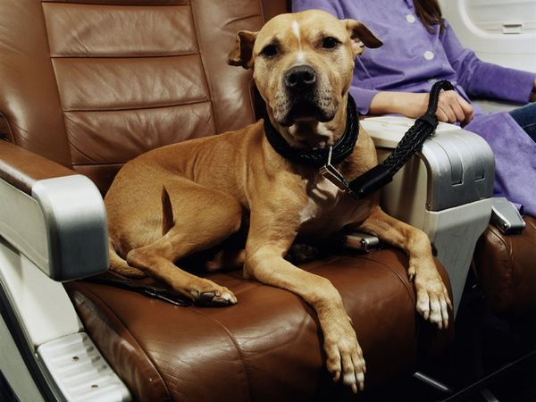 Dog in cabin of airplane