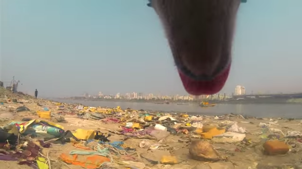 Day in the Life of a Stray Dog