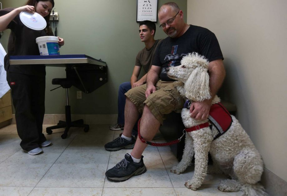 Service dogs at the vets office