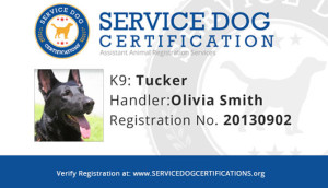 Service Dog Registration Card