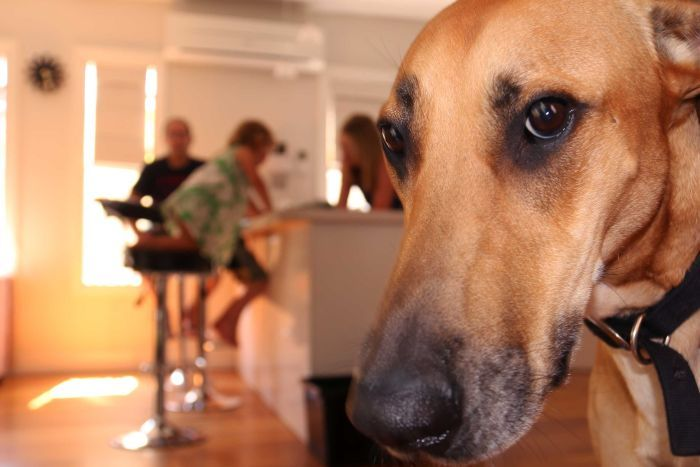 dog in a home