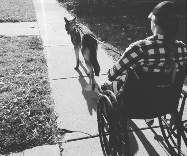 Service Dog Training for Mobility Assistance