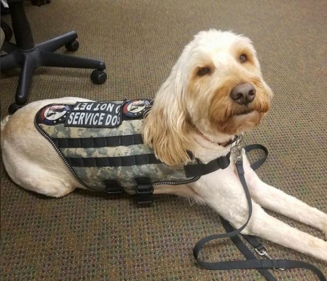 Trained Service Dog in Public