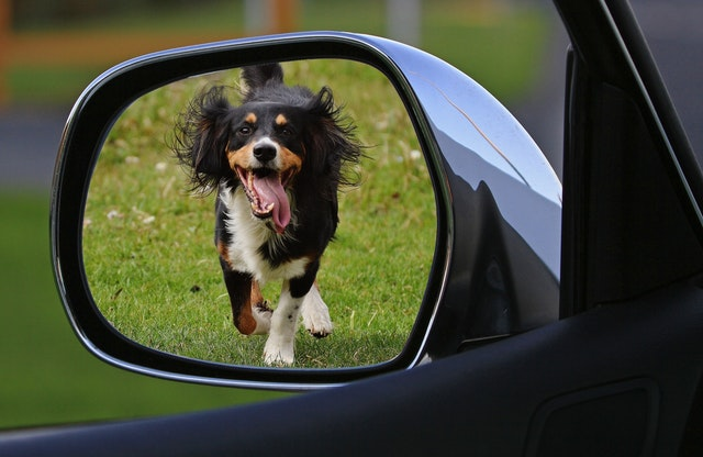 If your Uber driver does not accept your Service Animal, you can contact Uber's customer service.