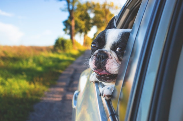 US and Canada Uber drivers must allow service animal in their vehicles.