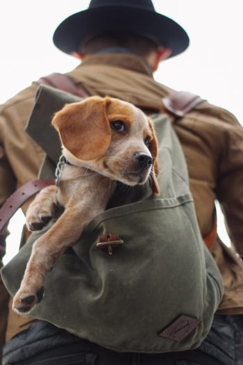 Man and service dog in backpack