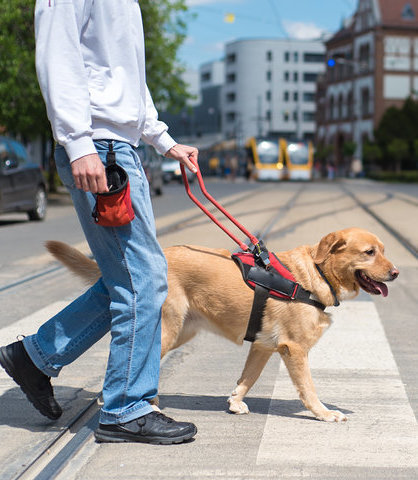 Service dog with owner walking