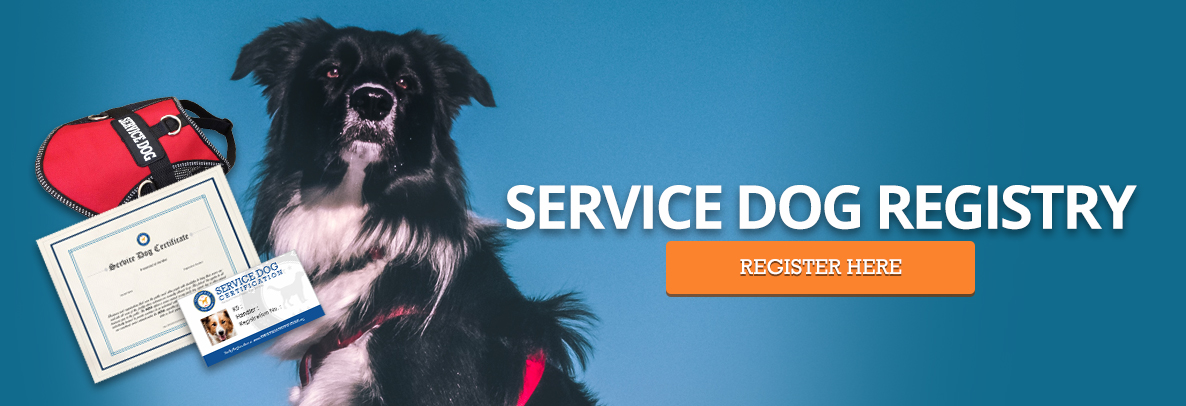 Service dog registration banner with border collie and certification information.