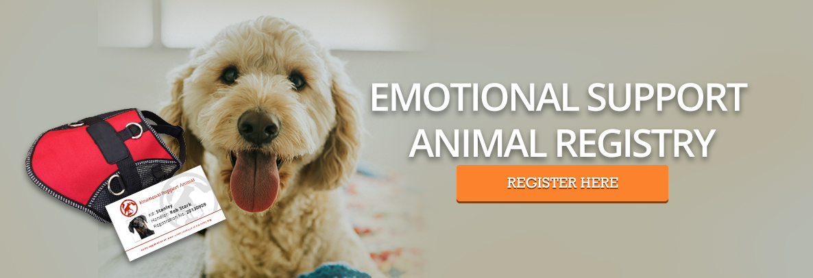 Emotional Support Dog Registration - Golden Doodle