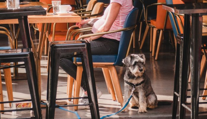 Service Dog with public access rights in a restaurant.