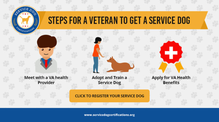 Steps for a veteran to get a service dog infographic.
