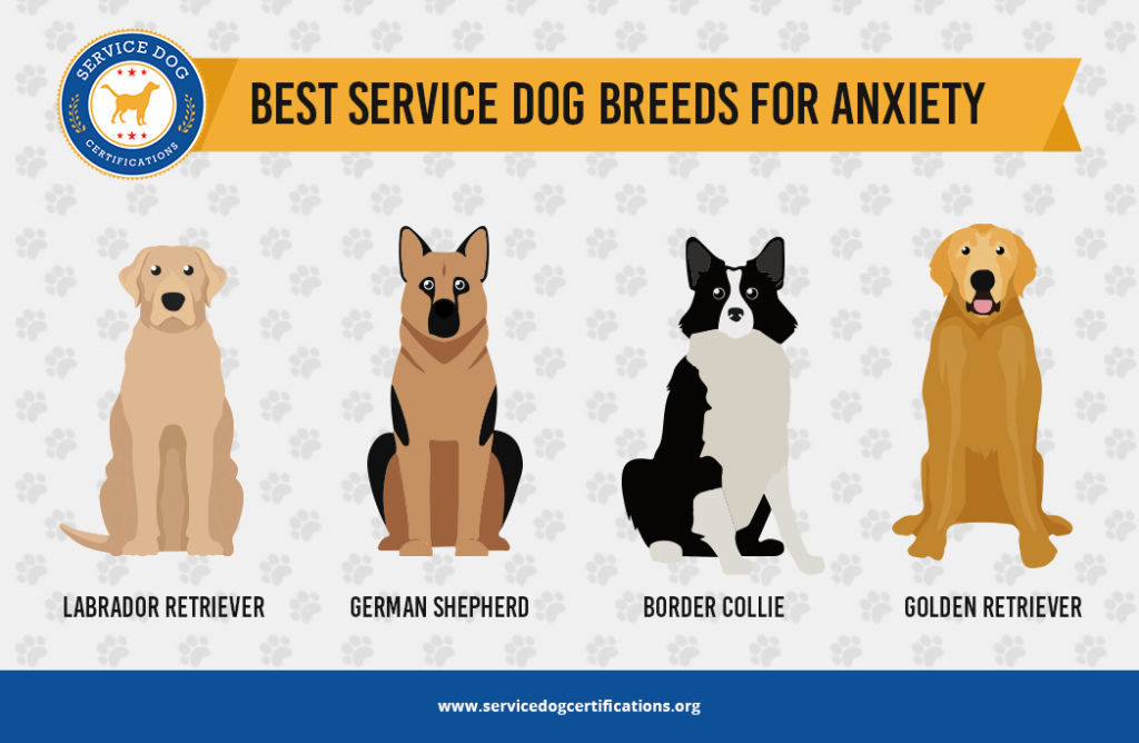 When choosing a service dog find a breed that fits your needs.