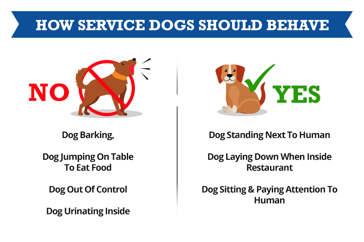 How service dogs should behave in public
