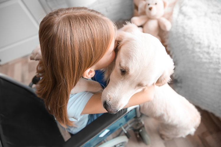 Service dog registration in New York can add a layer of protection to you and your service dog.
