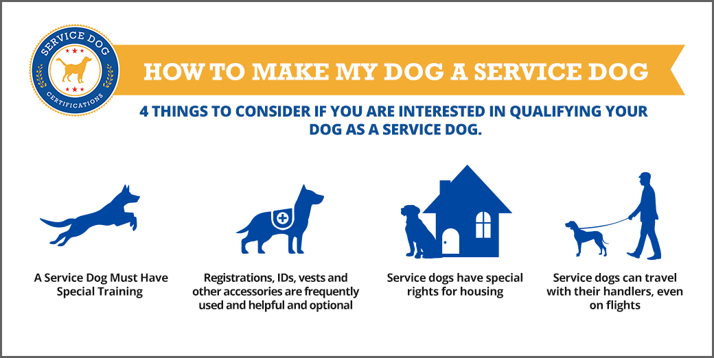 How to make my dog a service dog (infographic) - Service Dog Registration