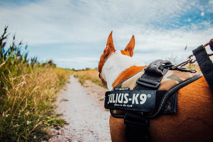A registered service dog in Colorado can perform their duty with fewer interruptions.