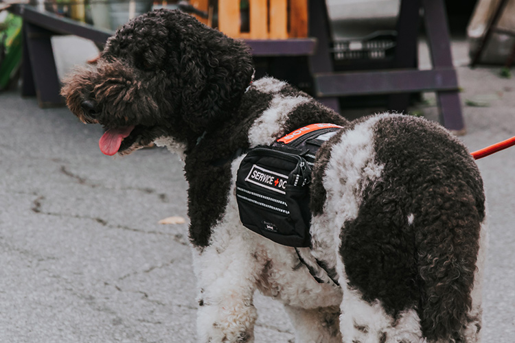 A service dog can assist individuals with a qualifying disability in all public areas.