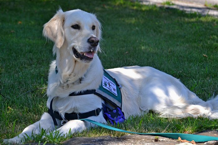 The size of the mobility service dog depends on the tasks they will need to perform in order to help their owner overcome the hardship of the disability. - ServiceDogCertifications