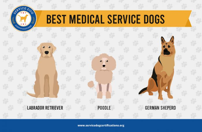Best Medical Service Dogs - Infographic - ServiceDogCertifications