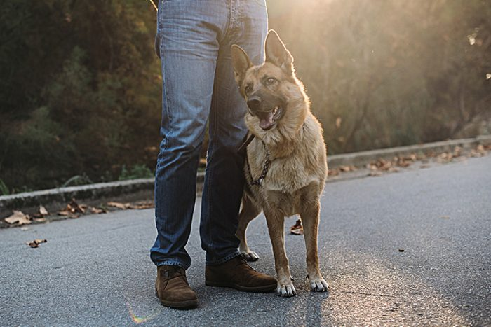 How to Train a Psychiatric Service Dog - ServiceDogCertifications